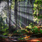 """Rays Through Redwoods"" was captured earlier this year in Butano State Park near Pescadero, California.  It was NOT the magic hour - quite the opposite! I captured this at 2 in the afternoon but with the fog beginning to lift, I noticed the sun streaming through the Redwoods creating those ""God Beams"" I love to chase!   I found this little stream with the redwood bark laying around and capture multiple exposures that I blended together.  As with all my favorite images, this is the place I want to be on a Friday afternoon."