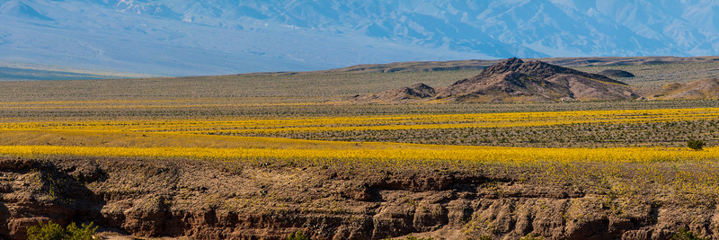 11) Death Valley Superbloom 201602221644