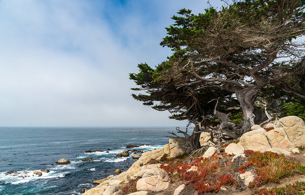 17 Mile Drive Coastal Front in Pacific Groove