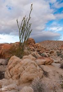 Mountain Palm Spring Canyon