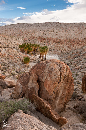 Boulder and Palm Oasis