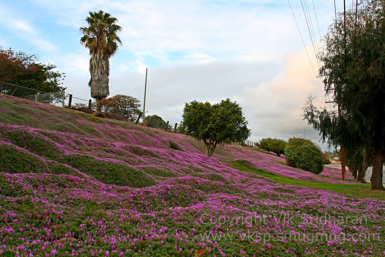 http://www.vksphoto.com/Landscapes/California/Dusk-in-Redondo-Beach/i-PCzc6sf/0/X2/IMG5003-X2.jpg
