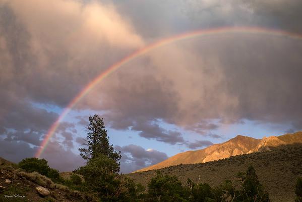 Convict Rainbow