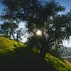 Sunburst Through Tree