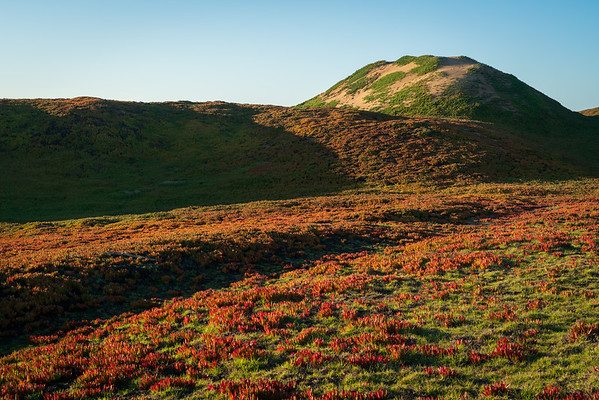 Green and Red Vegetation at Fort Ord Dunes State Park