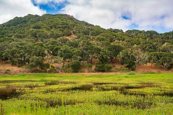The Wet Lands at Fort Ord National Monument