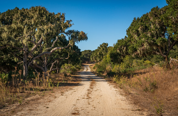 Back Country Road at Fort Ord National Monument
