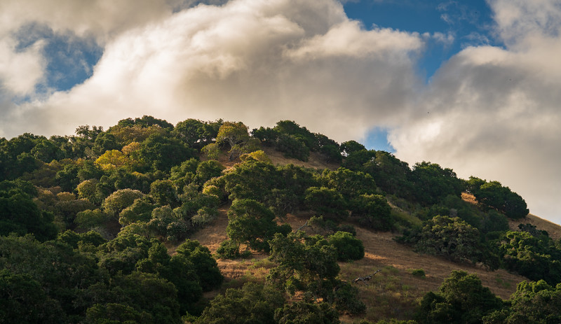 Fort Ord National Monument in California