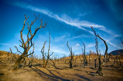 Burned Trunks of Trees