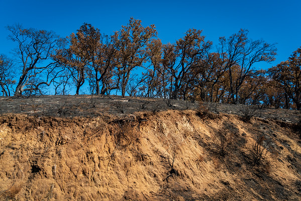 Los Padres National Forest, Forest Fire