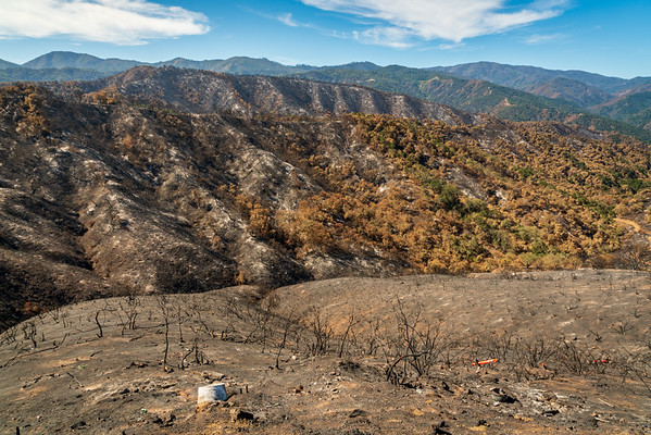 Los Padres National Forest, Forest Fire Aftermath
