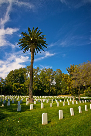 Palm Tree above the National Cemetery