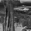 Mono Lake Sand Tufa