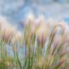 Windblown grass at Mono Lake