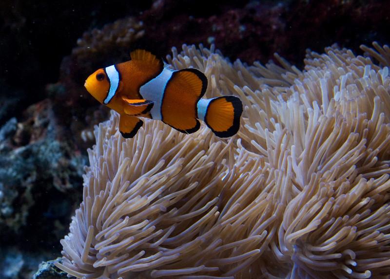 Nemo Looking