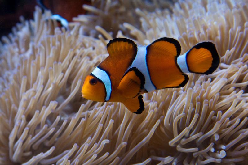 Nemo Waiting