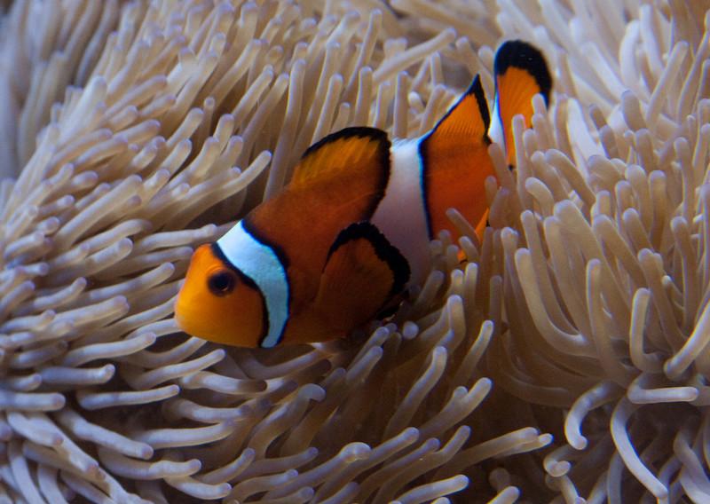 Nemo Resting