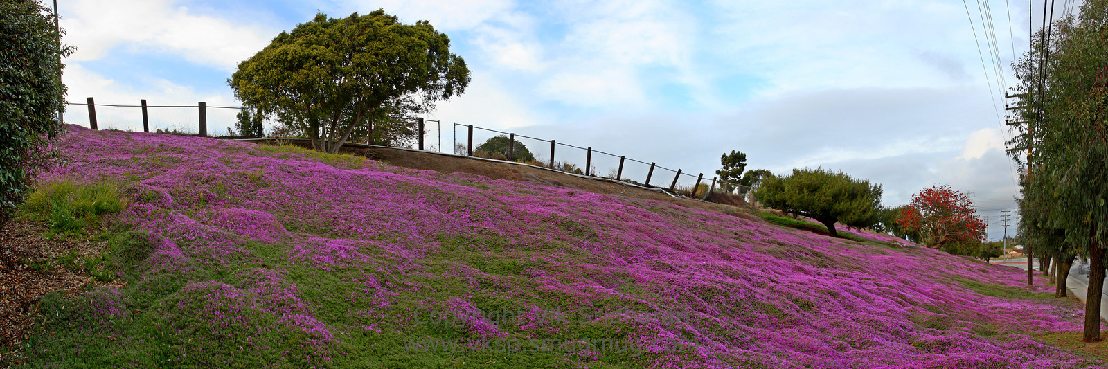 http://www.vksphoto.com/Landscapes/California/Panoramas/i-FMJVGw3/0/X3/Hillside-in-Bloom-X3.jpg