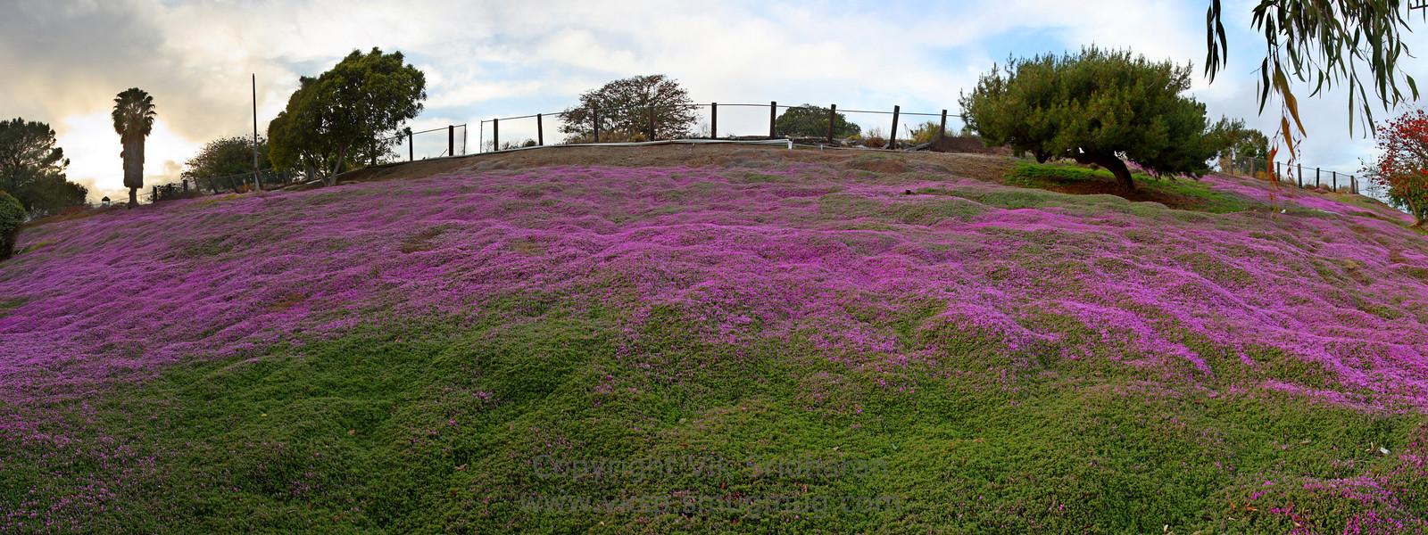 http://www.vksphoto.com/Landscapes/California/Panoramas/i-gRrwvJM/1/X3/hillside-in-bloom-2-X3.jpg