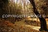 Nica fall foliage on the way to Yosemite Falls