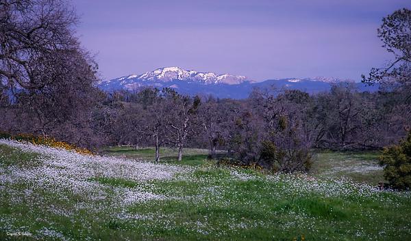 Sierra Glory