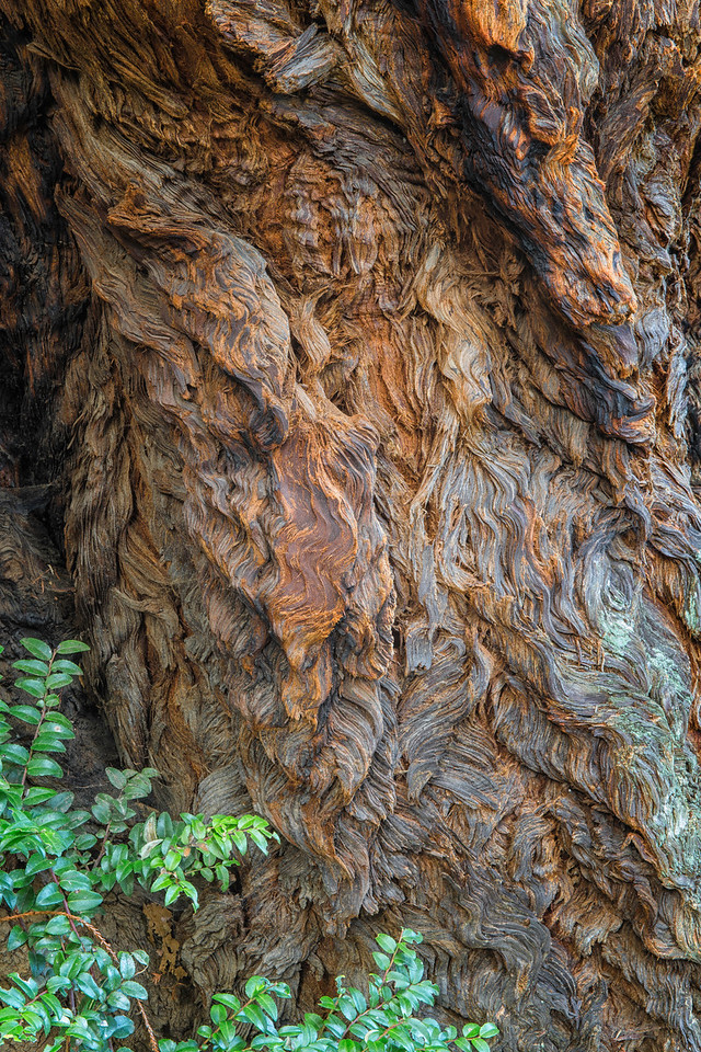 Redwood Trunk