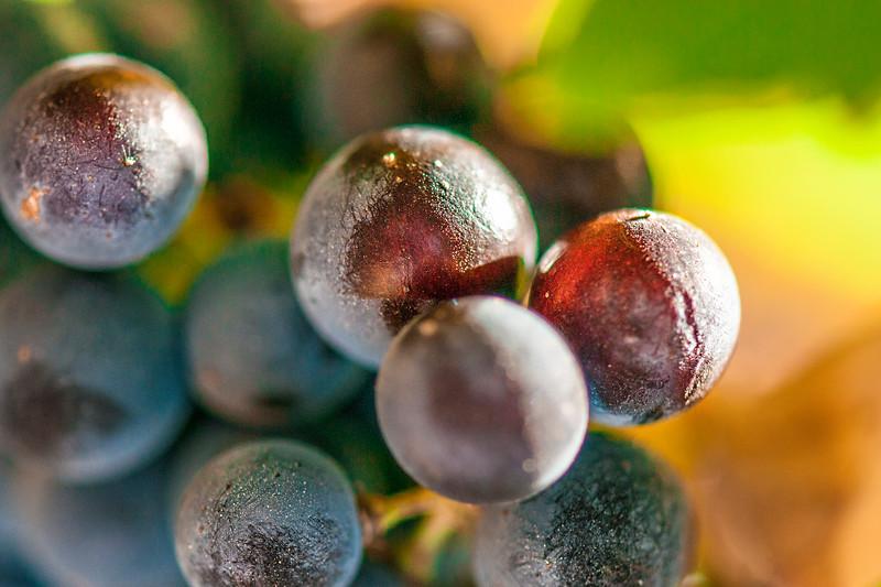 """""""Le Grapes"""""""