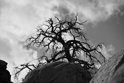 Joshua Tree N. P.