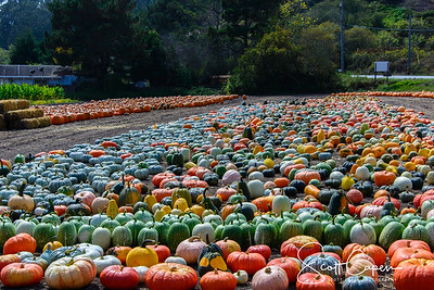 Mighty Punkin Patch