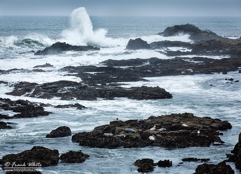 Surf and rocks at Pebble Beach State Park, south of San Francisco, CA