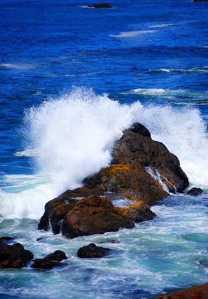 Bodega Bay Sept 2013 5