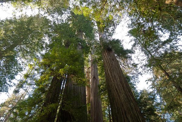 Redwoods NP, California