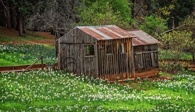Daffodil Hill Cabin