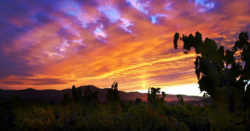 Harvest 2013 dawn over Yountville in the Napa Valley as a storm clears away.