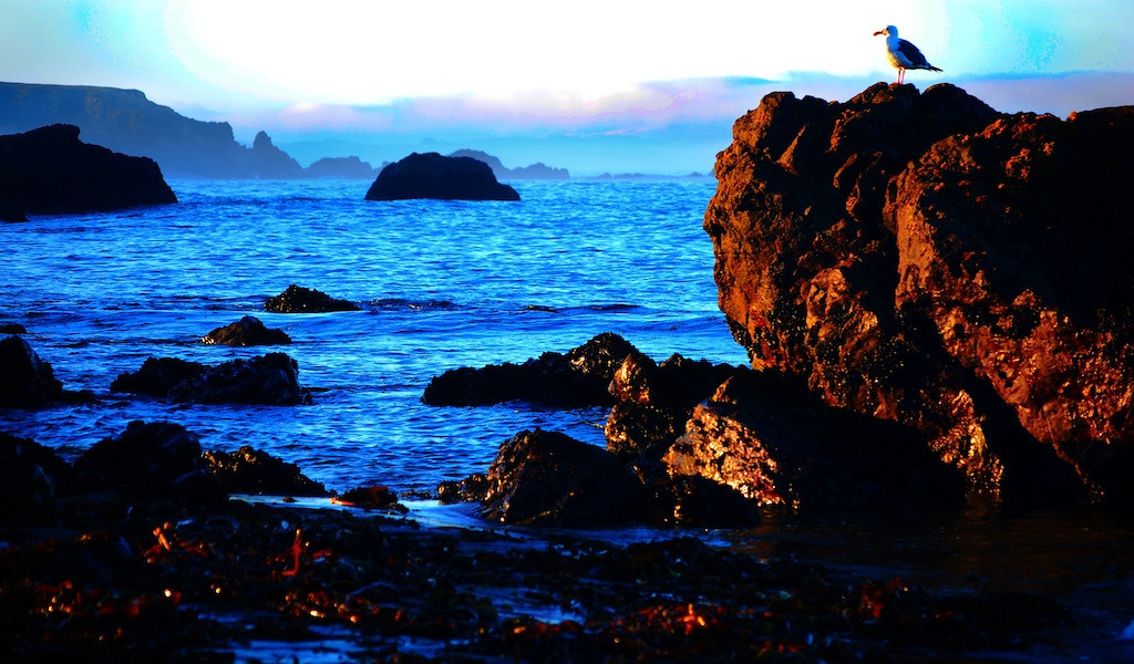 Bodega Bay Sept 2013 9