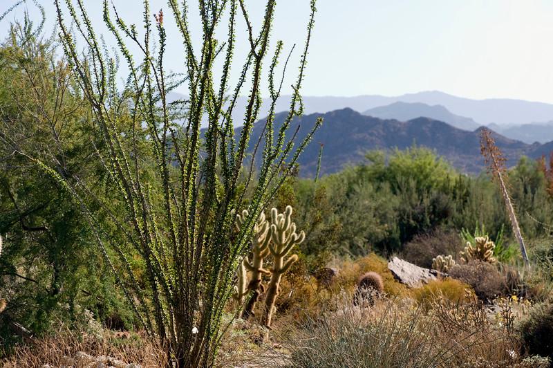 The beautiful Sonora Desert.