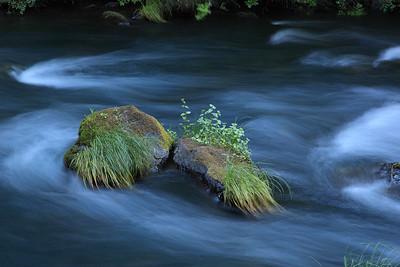 Burney Creek Northern California