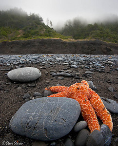 Praying for the Tide  Very remote in Humboldt County  Northern California - Lost Coast  Yes those are flies on this slowly dying starfish. Shot a few exposures to catch the bugs as sharp as could be and noticed a lot of movement while the starfish seemed to be stationary in front of me. I thought I would give you a different view and emotion feeling rather you than what would usually find.  The big rock was left alone to avoid disrupting the scene. I think that bright starfish is going to live to see the next high tide.  The style here is pretty documentary with a touch of art. Thank you for viewing this new gallery.