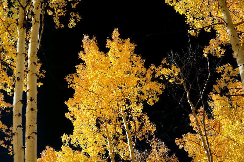 Golden light aspen