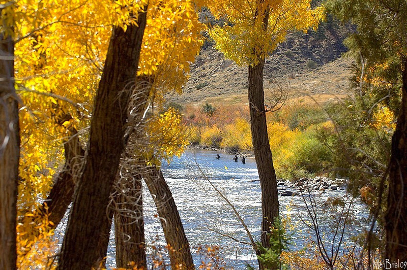 Fly fishing , Gunnison river ( next to Almont)