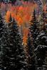 Aspen on fire