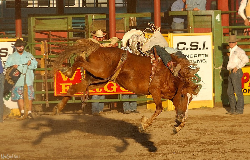 15 july 2011 rodeo 2 2 203