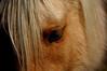 Ohio creek horse (Gunnison)