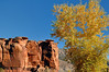 Fall & Red Rocks