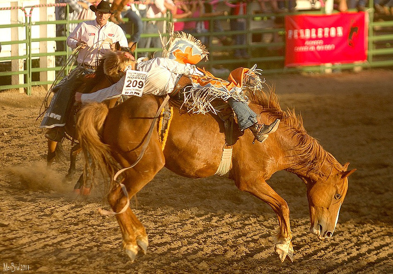14 july 2011 rodeo5 237