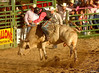 14 july 2011 rodeo 1 14 61