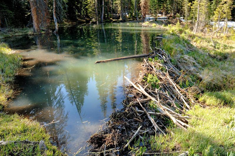 Beaver dam , beaver pond