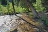 Creek to cross  in Rustler Gulch