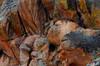 indian rock ( Gunnison )