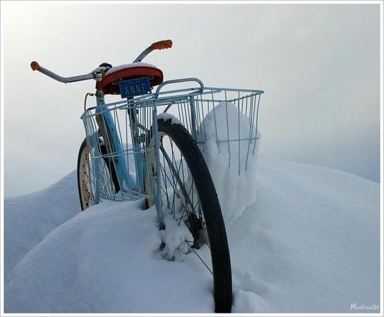 Ann's bike
